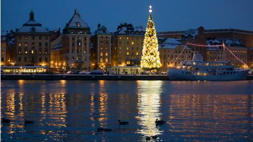 Stockholm Christmas Birding Tours
