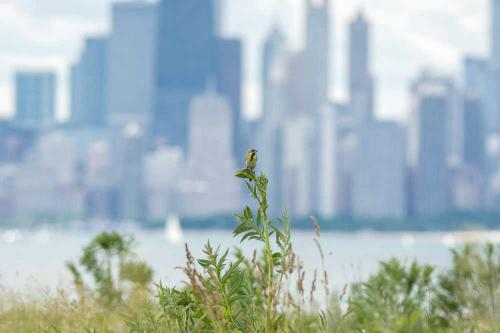 Chicago Lyric Opera and Birding Tour