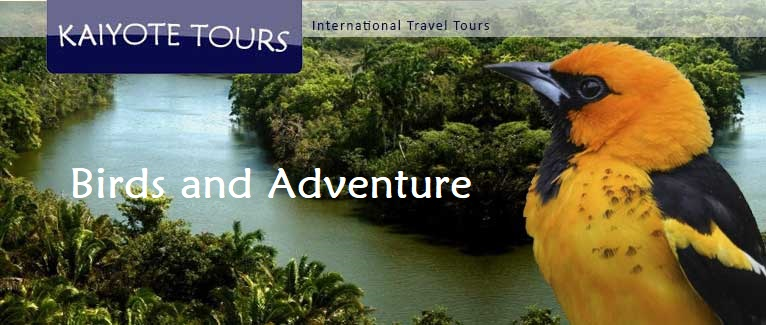 El Salvador Birding Tours Wildlife Adventure