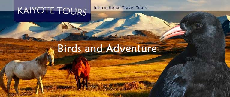 Mongolia Birding Adventure and Culture Tour