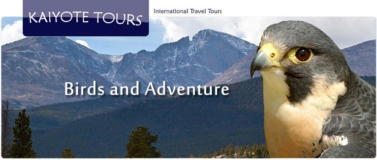 International Birding, Adventure and Travel Tours Reviews