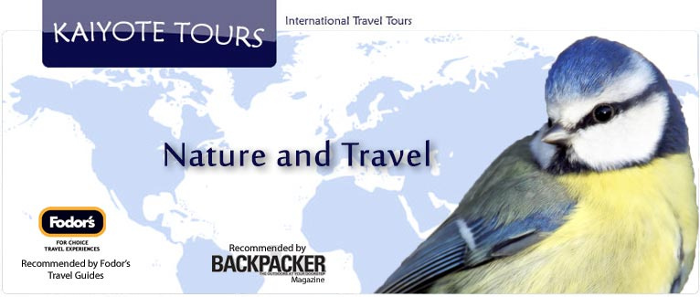 International Travel Tours