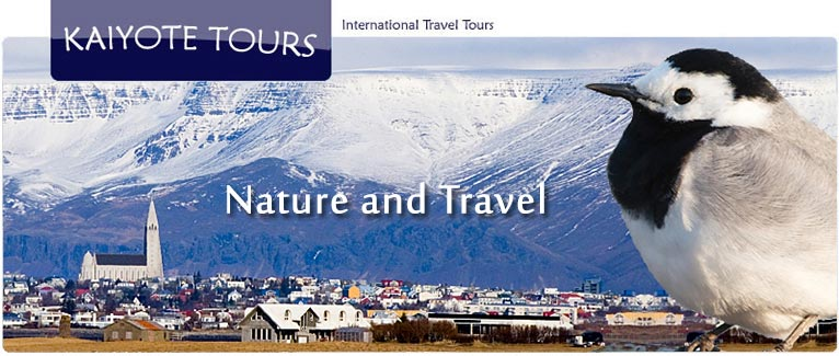 Iceland Northern Lights Winter Birding Tour