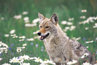 Explore Colorado Wildlife wtih Kaiyote Tours