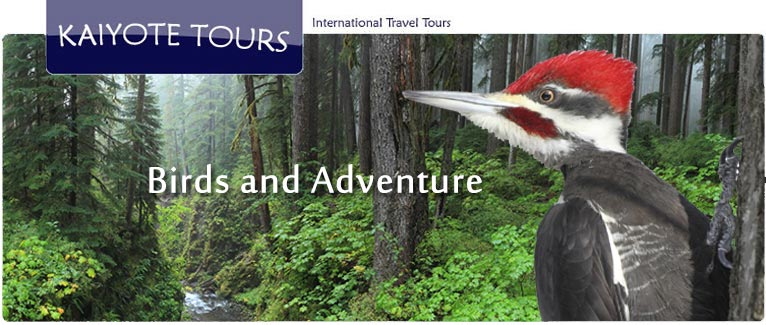 Birding and Exploring Olympic National Park with Kaiyote Tours