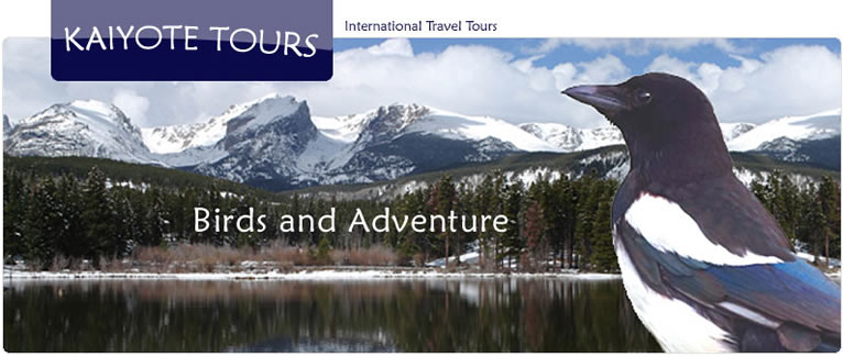 Birding and Exploring Colorado and Rocky Mountain National Park with Kaiyote Tours