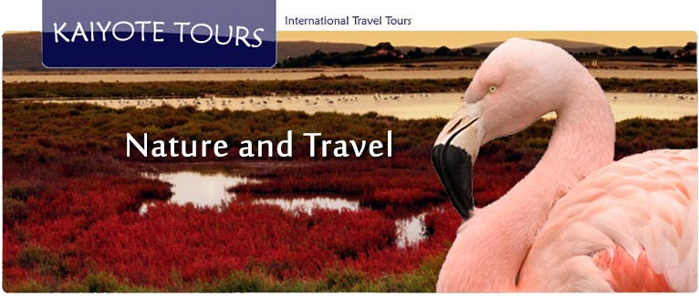 Birding and Exploring France with Kaiyote Tours