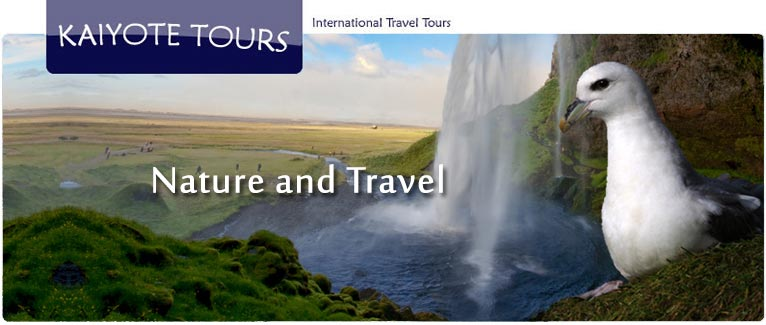 Birding and Exploring Japan with Kaiyote Tours