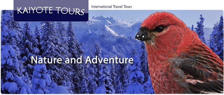 Winter Activities in Olympic National Park with Kaiyote Tours