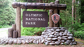 Guided Tours of Olympic National Park by Kaiyote Tours